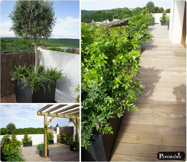 terrasse bois exotique cumaru saint coud pergola vegetaux bacs