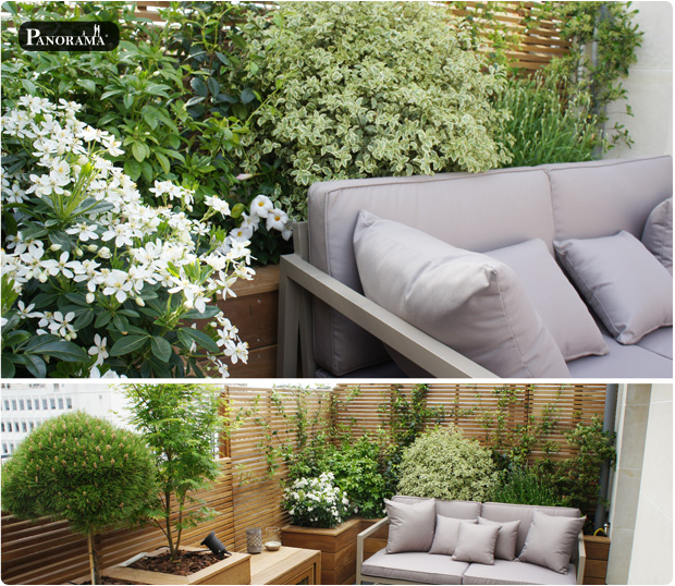 vegetaux terrasse bois pittosporum oranger mexique pin greffé panorama terrasses vincennes