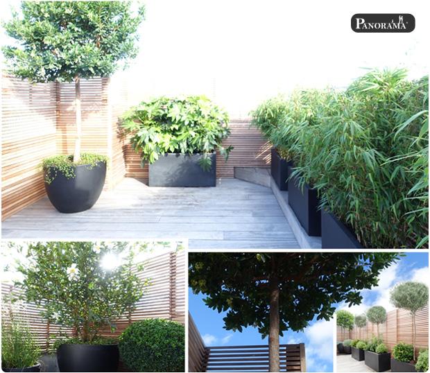 boulogne billancourt 92 vegetaux arbres terrasse bois panneaux ipe clairevoie panorama terrasses
